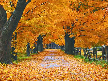 monográficos-caida-hoja-otoño