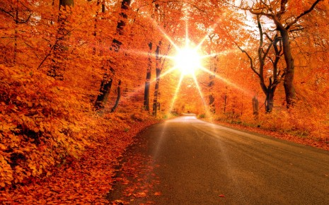 otono-Bella-carretera-en-otoño