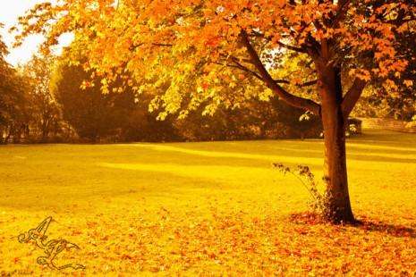 primer-dia-de-otono-otoño