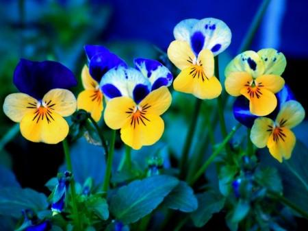 Flores-de-Primavera-450x337