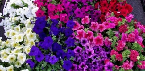 flores-para-decorar-la-casa-en-primavera