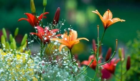 flores-primavera-L-WLMXQY