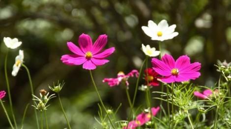 flores_en_primavera