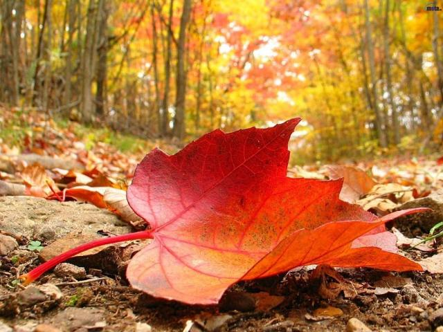 otoñohojas