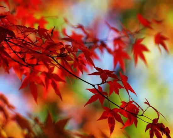 otoñohojas1