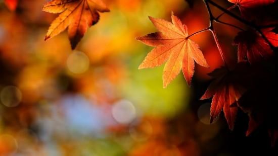 otoñohojas2