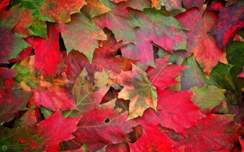 otoñohojas5