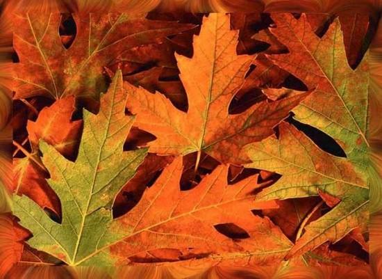 otoñohojas6