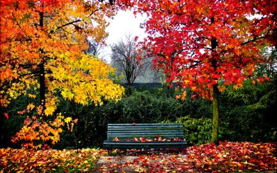 otoñopaisajes1