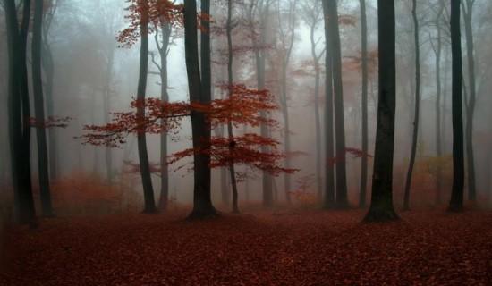 otoñopaisajes14