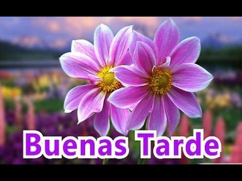 Saludos De Buenos Dias Buenas Tardes Y Buenas Noches Con