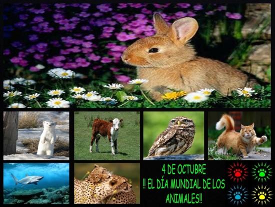 animalesmundial-jpg16