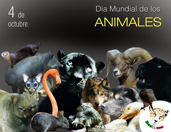 animalesmundial-jpg33