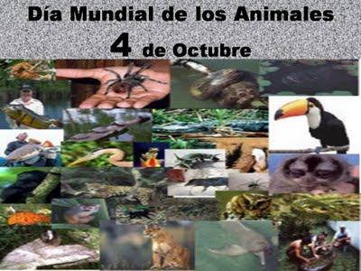 animalesmundial-jpg35