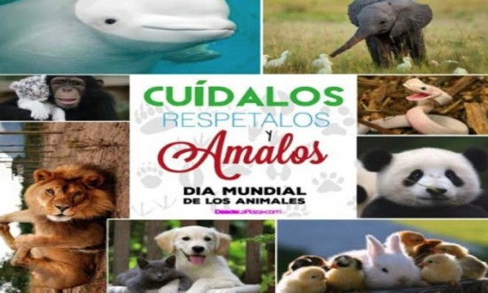 animalesmundialfrase-jpg16