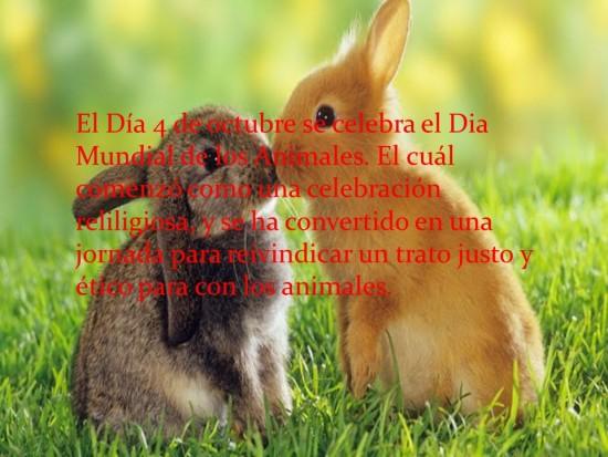 animalesmundialfrase-jpg20