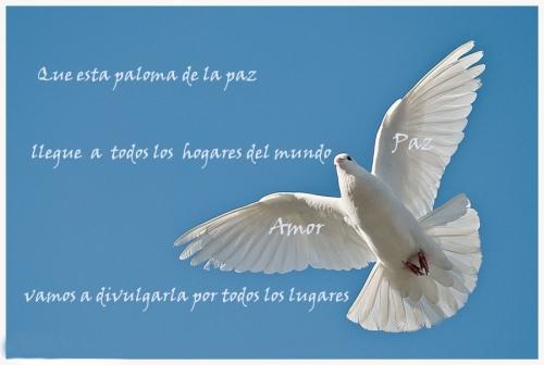 120 Frases Y Mensajes Para El Dia Internacional De La Paz Simbolos