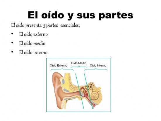 Imágenes del Oído Humano: Estructura, Partes y Nombres ...
