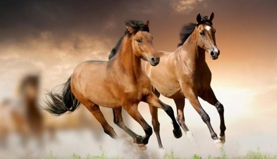 Imagenes De Animales Bonitos Dulces Y Tiernos Saberimagenes Com