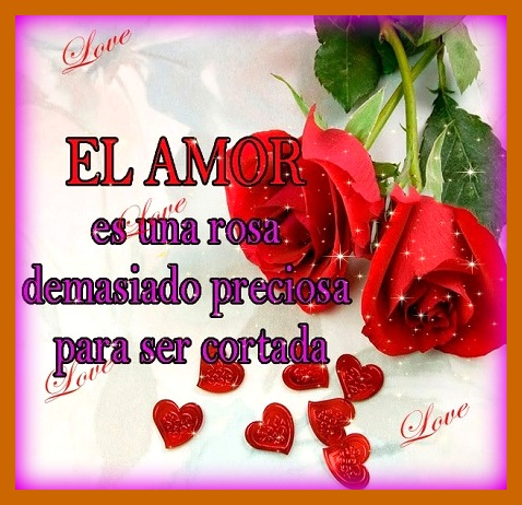 Imagenes De Flores Con Frases Bonitas Saberimagenes Com