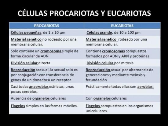 Cuadro Comparativo Entre Celula Animal Y Vegetal Organelos